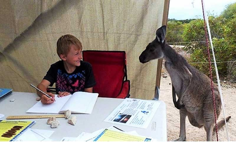 Kangaroo watching a NEPSODE student doing his homework in a remote location